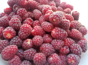 loganberries make a fine pie