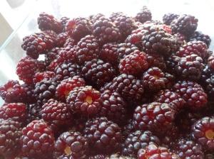 boysenberries for pie at petaluma pie