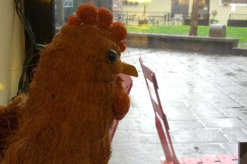 rainy day chicken