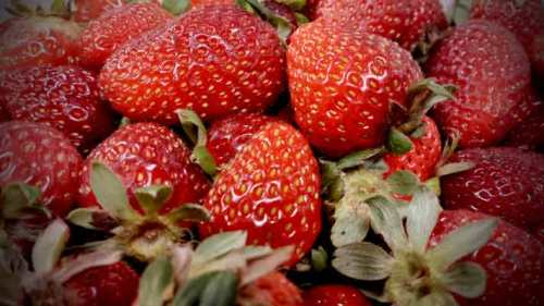 organic strawberries at Petaluma Pie Company
