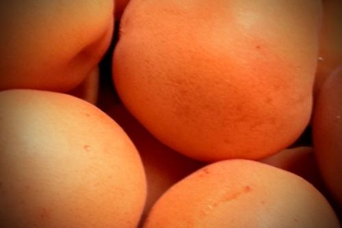 royal apricots
