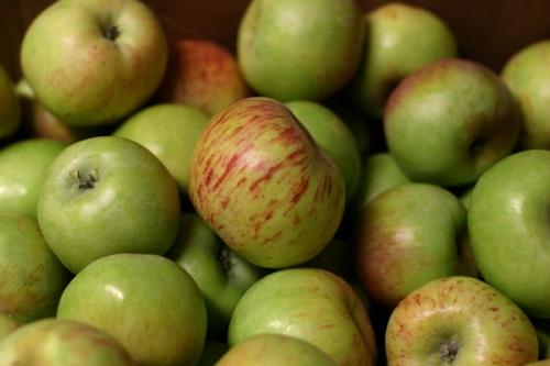 Gravenstein Apples from Marshall Ranch in Sebastopol